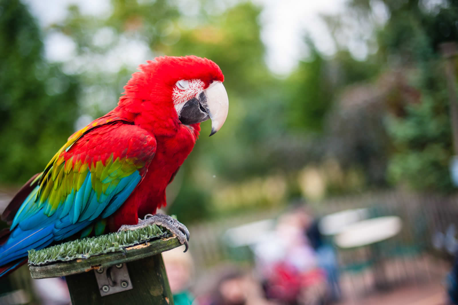 tropical butterfly house - attraction - sheffield - south