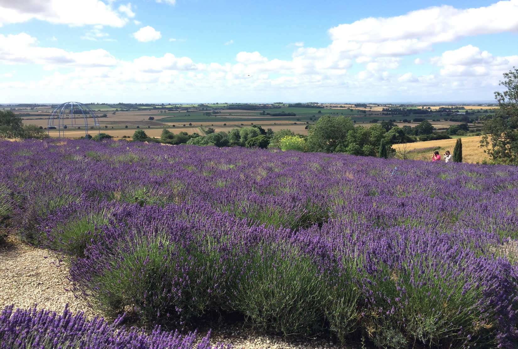 Yorkshire Lavender with free time in York